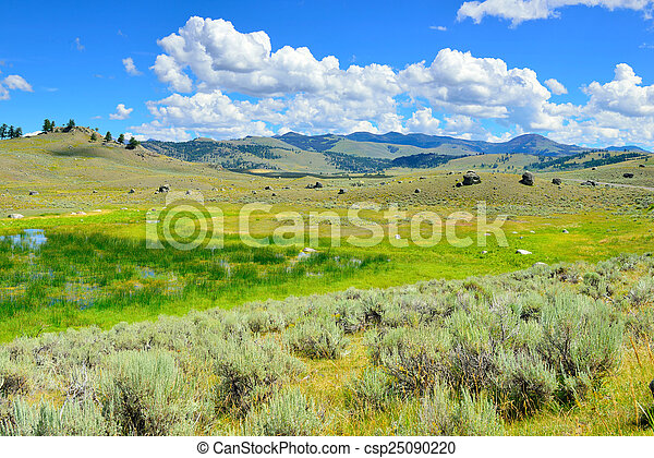 Lamar Valley in Yellowstone National Park, Wyoming in summer - csp25090220