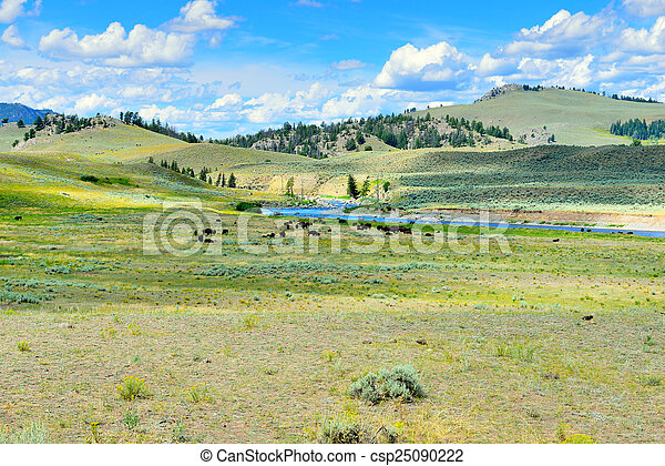 Lamar Valley in Yellowstone National Park, Wyoming in summer - csp25090222