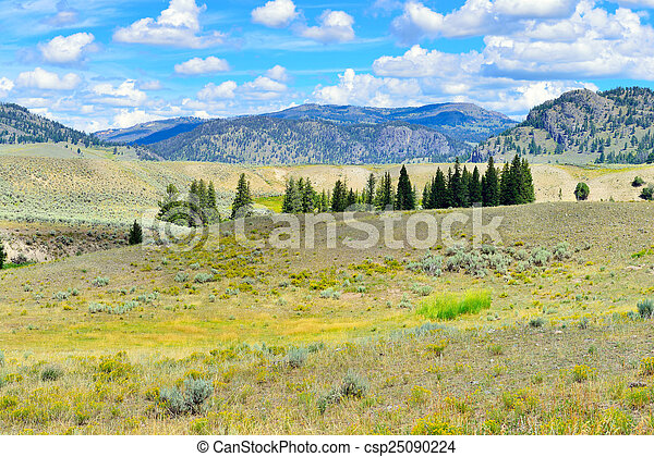 Lamar Valley in Yellowstone National Park, Wyoming in summer - csp25090224