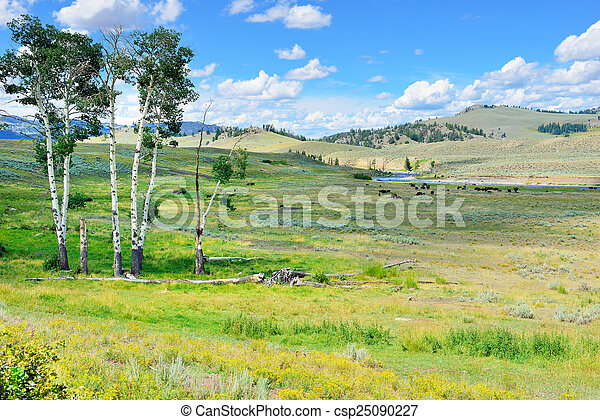 Lamar Valley in Yellowstone National Park, Wyoming in summer - csp25090227