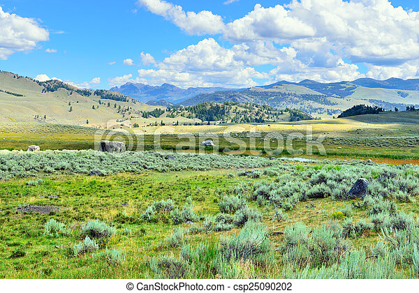 Lamar Valley in Yellowstone National Park, Wyoming in summer - csp25090202