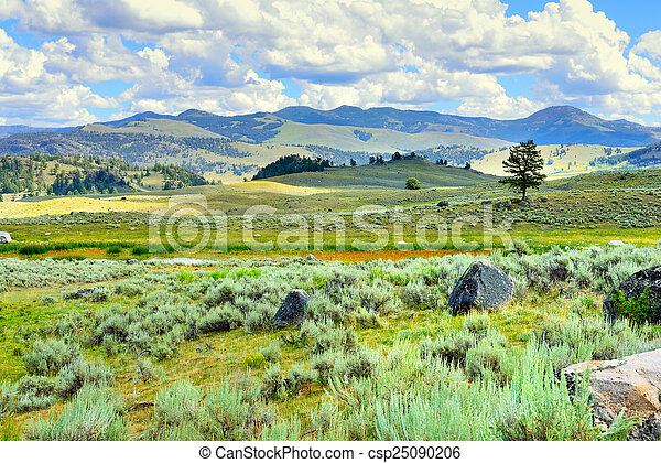 Lamar Valley in Yellowstone National Park, Wyoming in summer - csp25090206