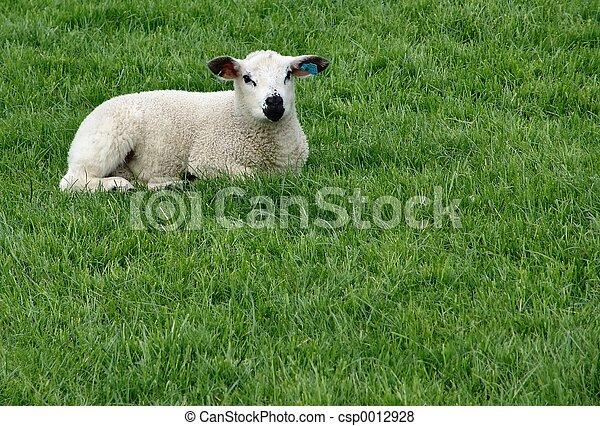 Lamb - csp0012928