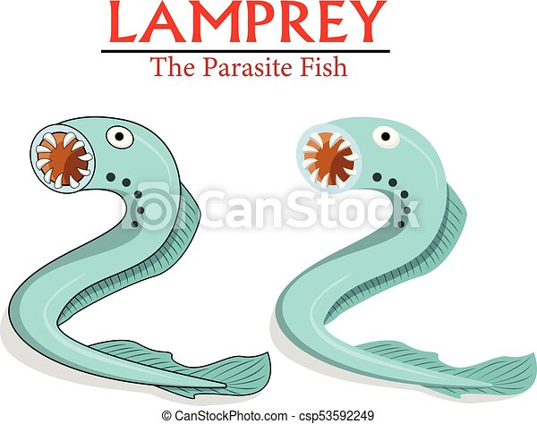 Lamprey Parasite Fish In Vector Cartoon Design
