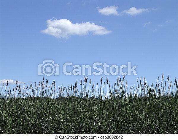 Landscape 1 - csp0002842