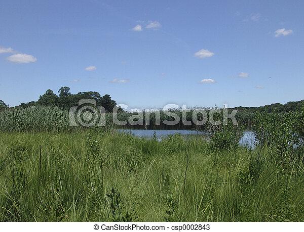 Landscape 2 - csp0002843