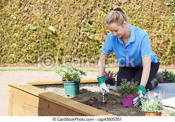 Landscape Gardener Planting Flower Bed In Garden
