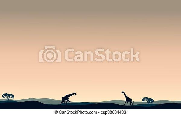 Landscape giraffe at afternoon - csp38684433