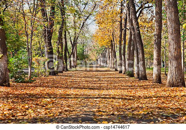 landscape in autumn park - csp14744617