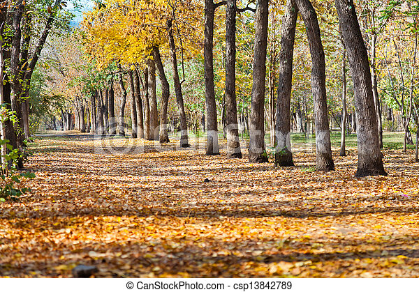 landscape in autumn park - csp13842789