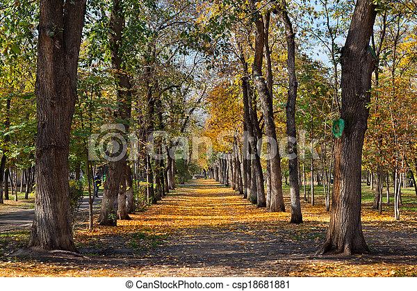 landscape in autumn park - csp18681881
