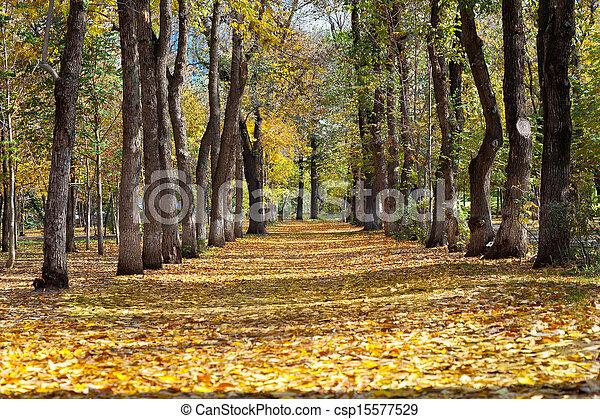 landscape in autumn park - csp15577529