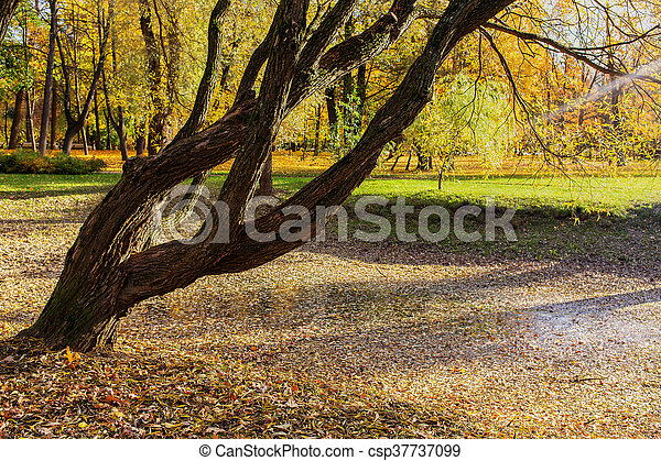 landscape in autumn park - csp37737099