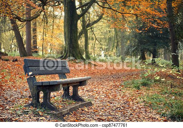 Landscape in autumn park with bench - csp87477761