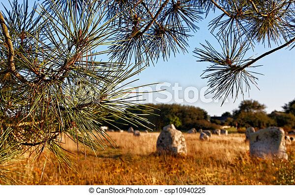 Landscape in Carnac - csp10940225