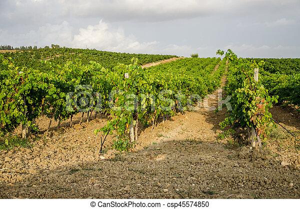 Landscape in Sicily, Menfi (Ag) - csp45574850