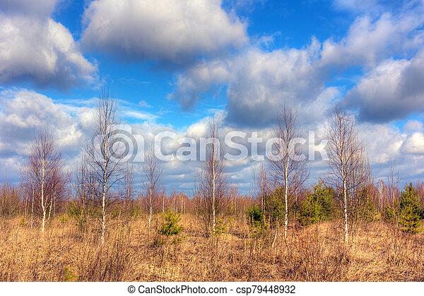 Landscape in spring - csp79448932