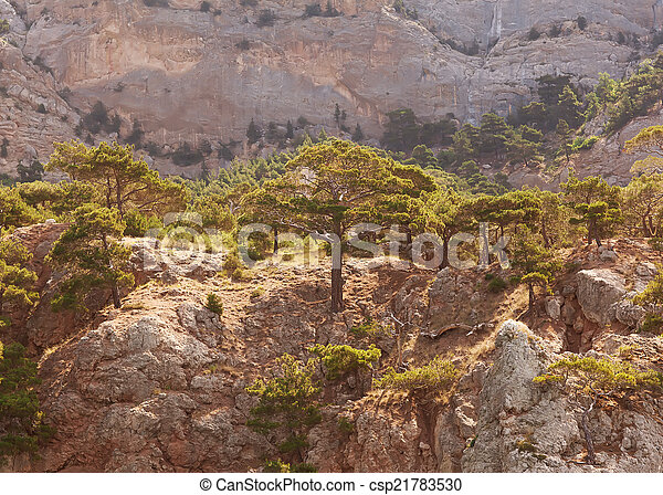 Landscape in the mountains, mighty pine trees and juniper can. - csp21783530