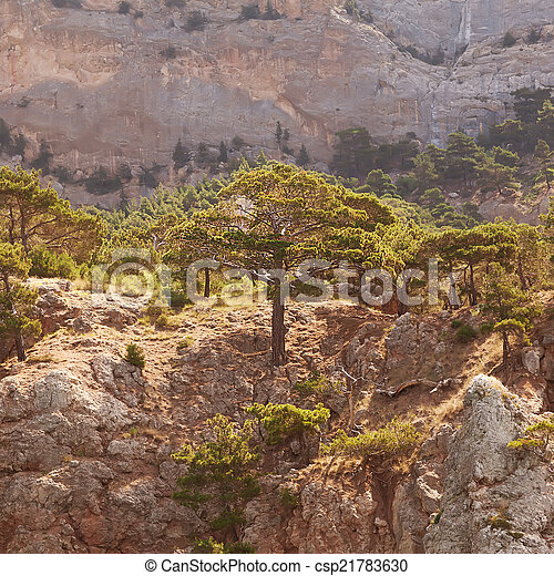 Landscape in the mountains, mighty pine trees and juniper can. - csp21783630