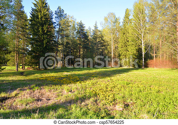 Landscape in the park in spring. - csp57654225