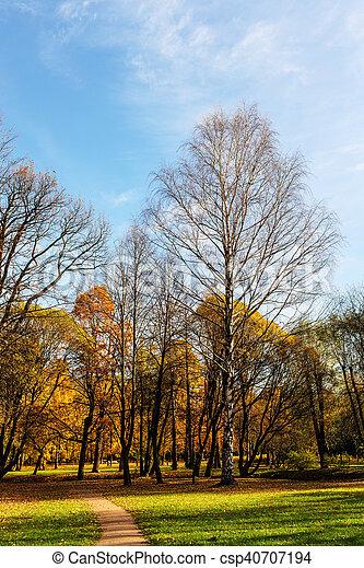 landscape in the park - csp40707194