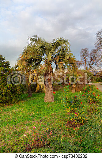 landscape in the park - csp73402232