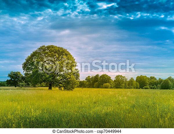 landscape, nature - csp70449944