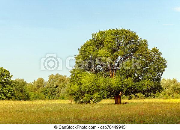 landscape, nature - csp70449945