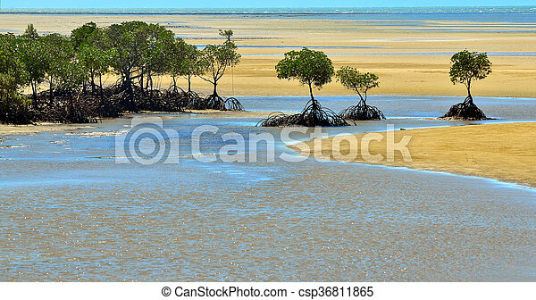 Landscape of a wild beach with Australian mangroves in Queensland  Australia - csp36811865