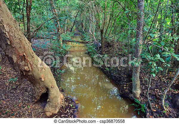 Landscape of a wild stream in Queensland Australia - csp36870558