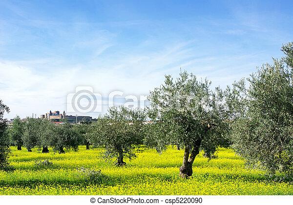 Landscape of alentejo region, Portugal. - csp5220090