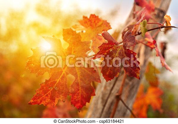 Landscape of Barolo wine region - csp63184421