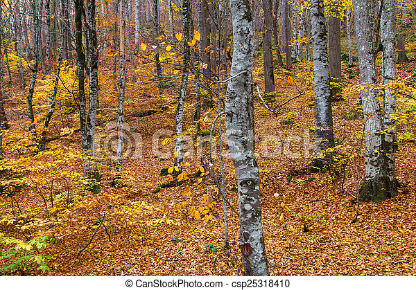 Landscape of Forest in Autumn - csp25318410