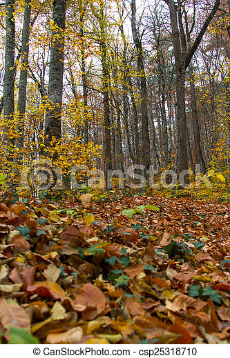 Landscape of Forest in Autumn - csp25318710