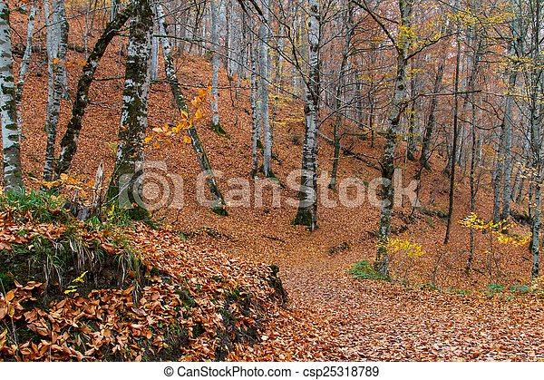 Landscape of Forest in Autumn - csp25318789