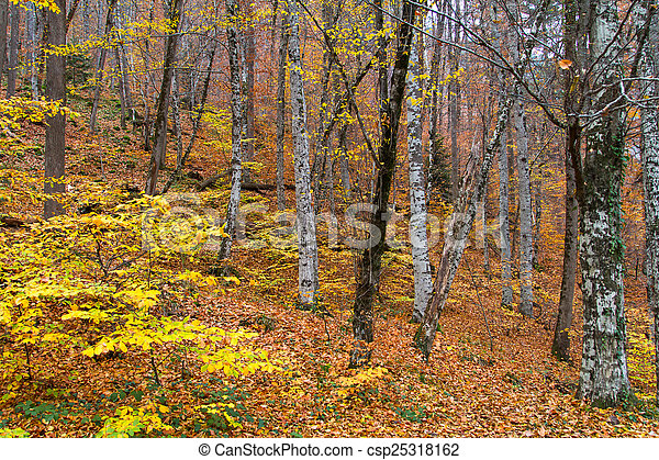 Landscape of Forest in Autumn - csp25318162