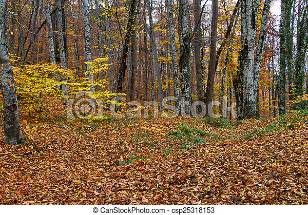 Landscape of Forest in Autumn - csp25318153