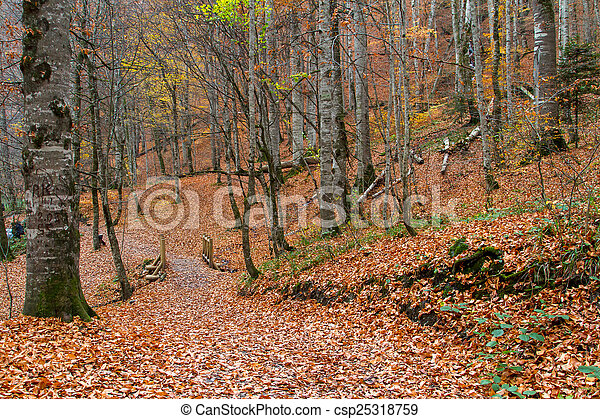Landscape of Forest in Autumn - csp25318759
