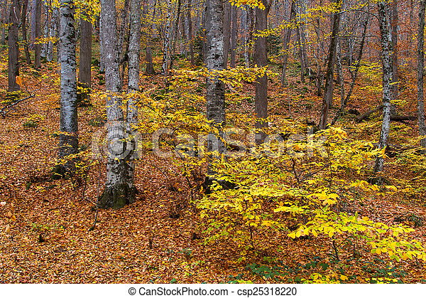 Landscape of Forest in Autumn - csp25318220