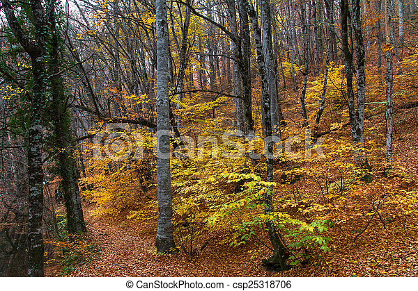 Landscape of Forest in Autumn - csp25318706