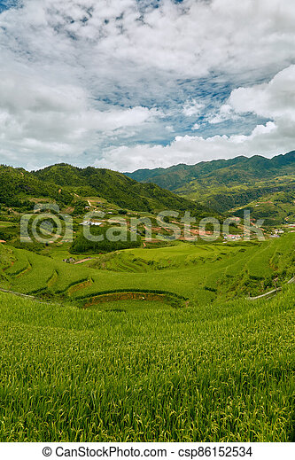 Landscape of rice paddies in a cloudy morning - csp86152534