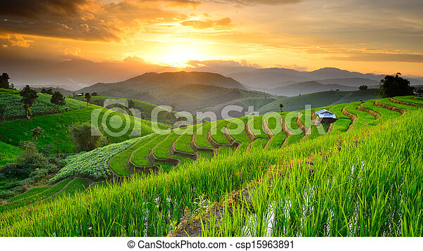 landscape of Rice Terraces with sunset backdrop at Ban Papongpieng Chiangmai Thailand - csp15963891