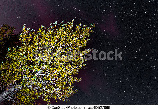 landscape of the night sky silhouettes of trees - csp60527866