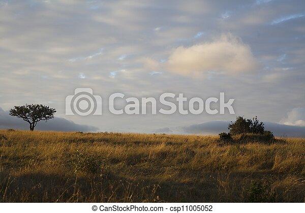 landscape of the savannah in Kenya - csp11005052