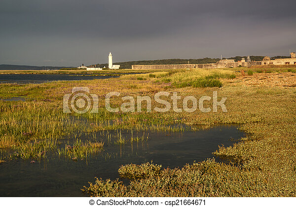 Landscape of wetlands foliage during stormy sky sunset towards l - csp21664671
