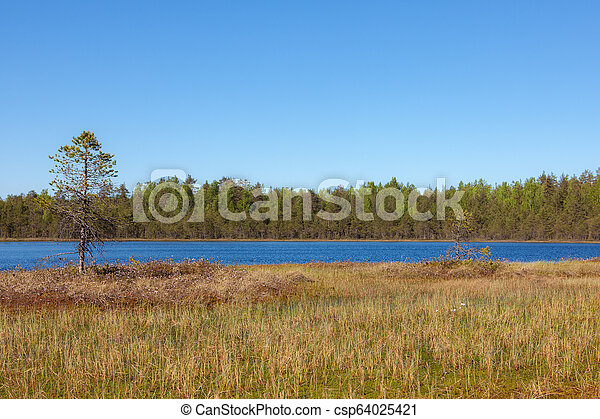 landscape on a forest lake - csp64025421