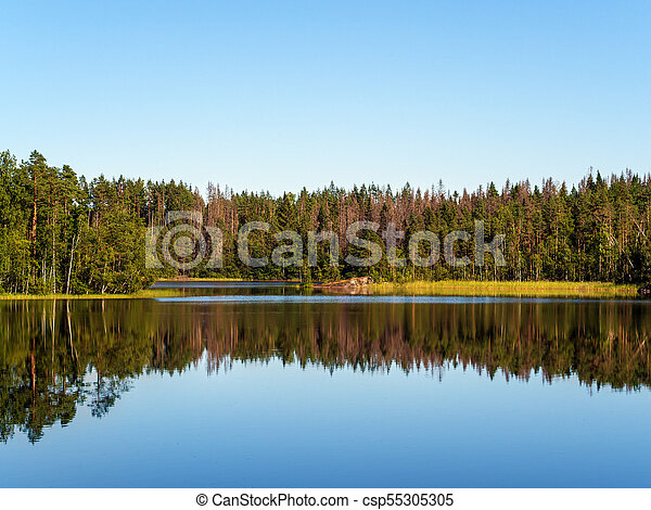 landscape on a forest lake - csp55305305