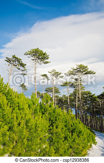 landscape - csp12938386