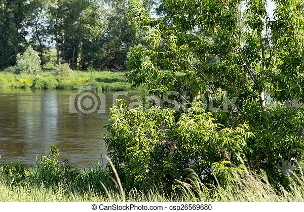 Landscape - csp26569680