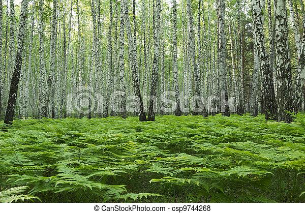 Landscape - csp9744268